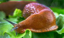 12 Organic Ways to Keep Your Garden Free of Slugs