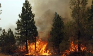 California Drought 2014: Monitor Map Shows Widespread 'Exceptional' Drought as Wildfires Rage and Emergency Declared