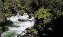 Rotorua, Hot Springs: Natural Beauty of New Zealand (Video)