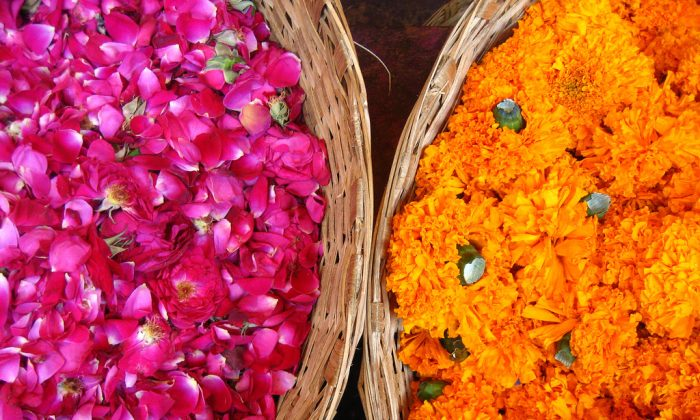 Roses or marigolds, what is the scent of love? (Meena Kadri, CC BY-ND)