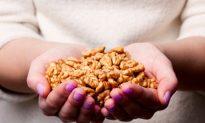 Walnuts Found to Improve Brain Performance