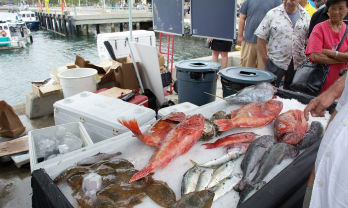 Some selections of fresh fish at the Tuna Harbor Dockside Market, San Diego, Calif., on Aug. 2. (Jane Yang/Epoch Times)