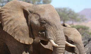 New Jersey Bans Elephant Ivory Trade