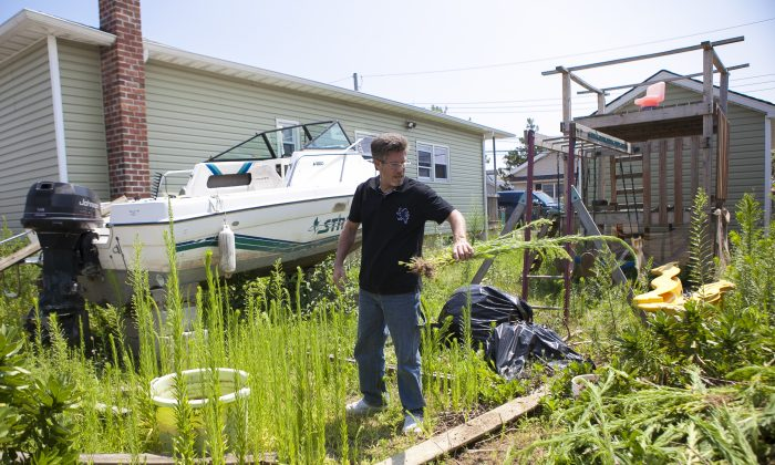 John Walsh cleans the weeds at his Sandy-destroyed home in Broad Channel, Queens, New York, Aug. 31, 2014. (Samira Bouaou/Epoch Times)