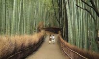 Top 10 Travel Attractions of Kyoto, Japan (Video)