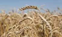 Avoiding Gluten Good for More Than Just Celiacs, Study Confirms