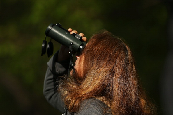 Robin Taubman looks for birds during one of the best months for bird watching on May 7, 2014 at Prospect Park in the Brooklyn borough of New York City.  (Photo by Spencer Platt/Getty Images)