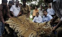 India Biodiversity Seriously Threatened