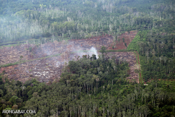 Peat fire in Sumatra. Such fires are used to clear forests and vegetation for agriculture but release CO2 and cause haze far-and-wide. In recent years, such burning in Indonesia has led to health concerns across Southeast Asia. Photo by: Rhett A. Butler.