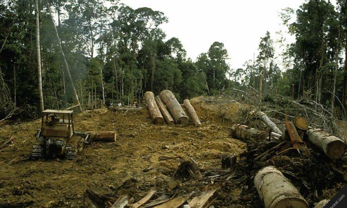 Destroyed rainforest