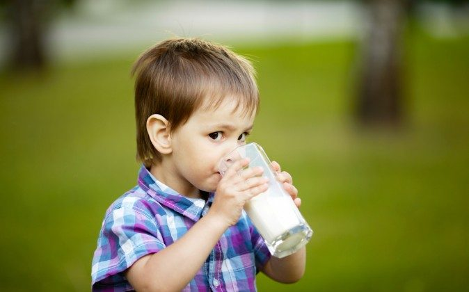 Children consume more milk than adults, and in the U.S. many dairy cows are given the genetically engineered bovine growth hormone (rbGH) and fed diets of GMO grains (corn and soy).(Shutterstock*)