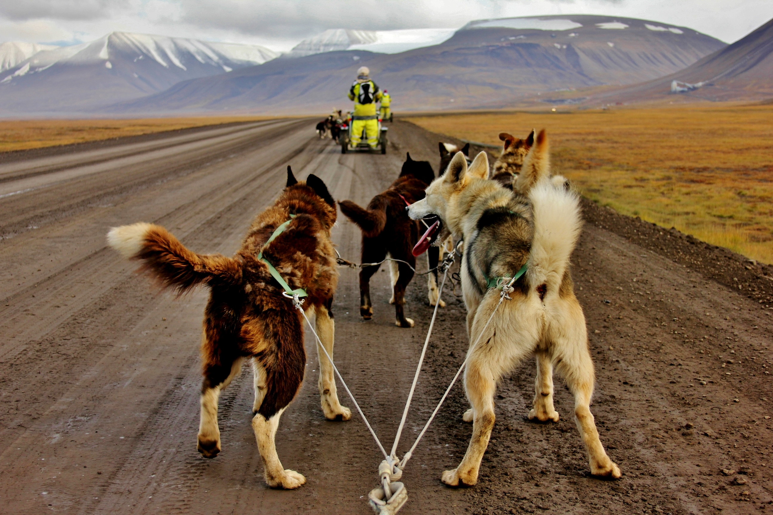 Husky dog sledding in Norway (The Culture Map)