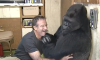 Watch: Gorilla Uses Sign Language to Implore Humans to Protect the Earth
