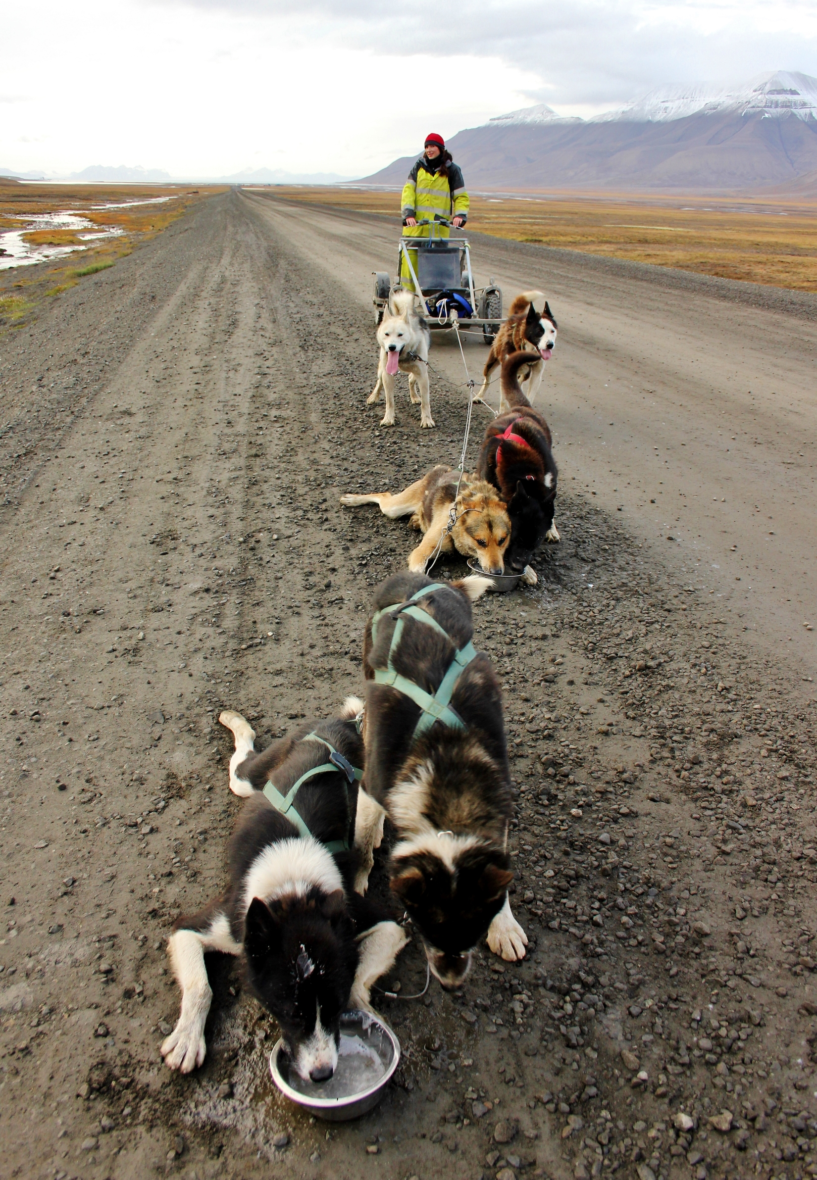 Dog husky sledding in Spitsbergen (The Culture Map)