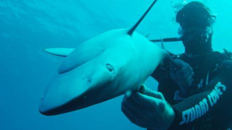 A shark in the so-called zombie state. (Discovery Channel)