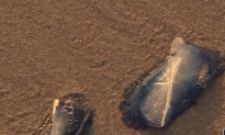Thousands of Mystery Creatures Invading Beach (Video)