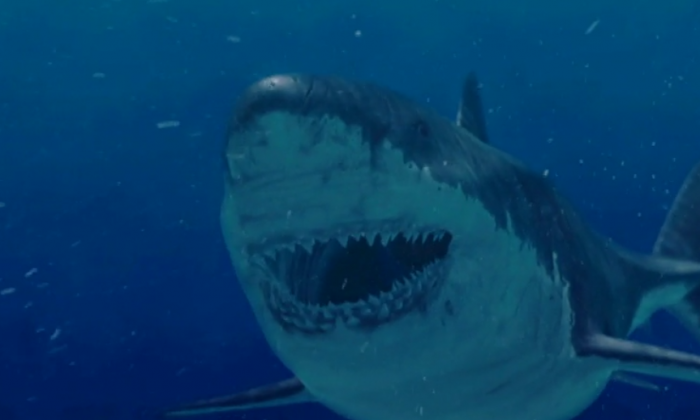 This animation from the Discovery Channel illustrates what a Megalodon shark would have looked like when alive. (Discovery Channel)