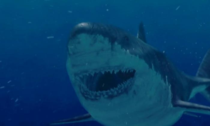 Megalodon Lives? 'Monster' Shark Still Alive? Discovery