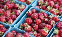 Sweet and Succulent Summer Fruits, the Glory of the Season