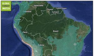 Peruvian Deforestation- A Paradise Lost