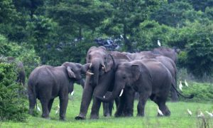 Resolving Elephants/ Human Conflicts in India