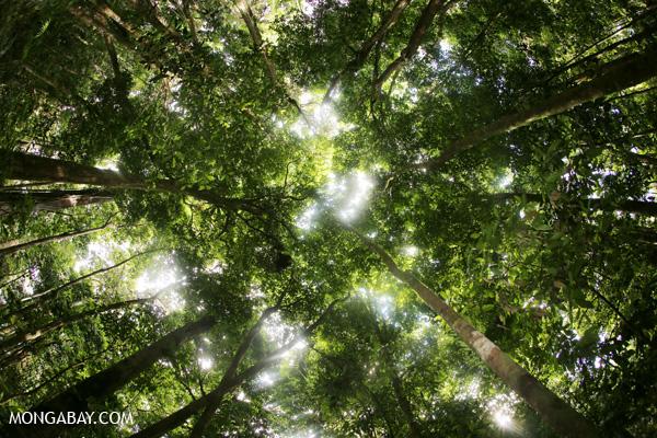 Tropical rainforest. Photo by Rhett A. Butler.