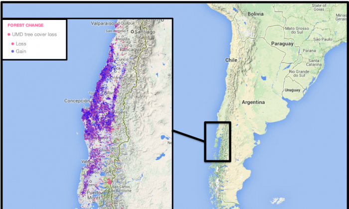 According to Global Forest Watch, most of Chile's forest change occurred in the central and southern regions of the country, with a loss of 1,088,102 hectares and a concurrent gain of 1,394,610 hectares between 2001-2013. These changes reflect cycles of logging and replanting in tree plantations. Map courtesy of Global Forest Watch.