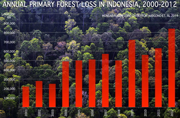 Indonesia now has the highest deforestation rate in the world, topping even Brazil which has more than five times the natural forest cover. Background photo: rainforest in Sumatra. (news.mongabay.com)