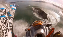 Surprised Skier Glides Over Whale (Video)