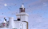 Coquet Island – Saving Unique Seabirds Place (Video)