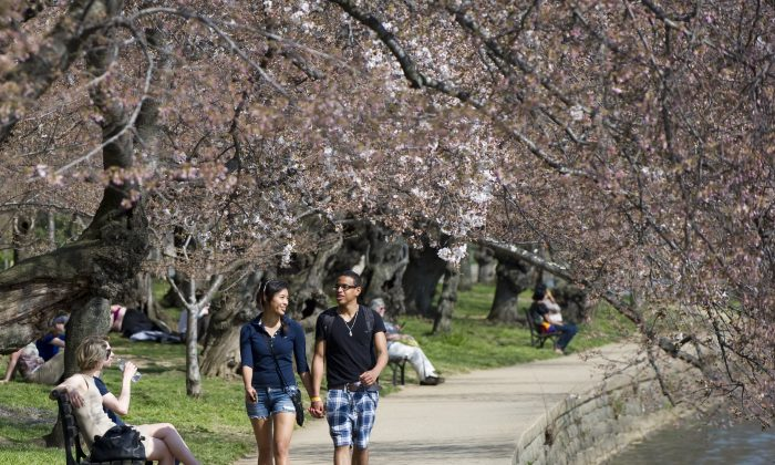 A couple hold hands as they walk beneath cherry blossom trees adjacent to the Tidal Basin on the National Mall in Washington, 2012. (Saul Loeb/AFP/Getty Images)