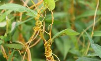 New Findings on How Plants 'Talk' to Each Other: Virginia Tech Scientist