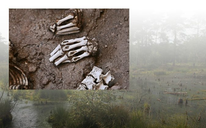 File photos of mummies and a bog. In Scotland, archaeologists found ancient bodies that revealed very unusual treatment of dead bodies involving in part the use of a bog. (Shutterstock*)