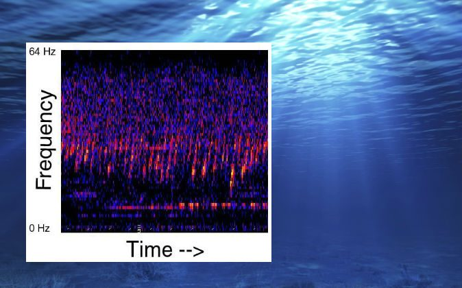 The Upsweep sound detected in the Pacific Ocean. (NOAA; background image via Thinkstock)
