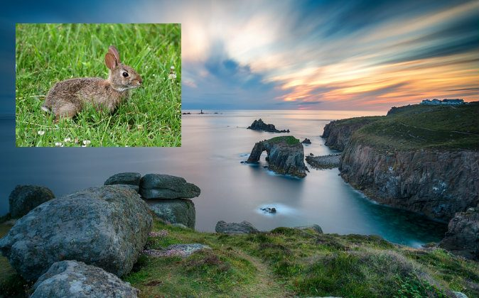 Main image: Sunset over Lands End in Cornwall. (Shutterstock*); Top left: Wondering rabbit (ForestWander via Wikimedia Commons)