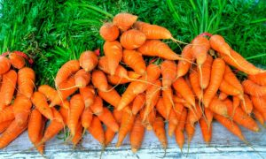 5 Ways Families on Real Budgets Can Afford Organic Food