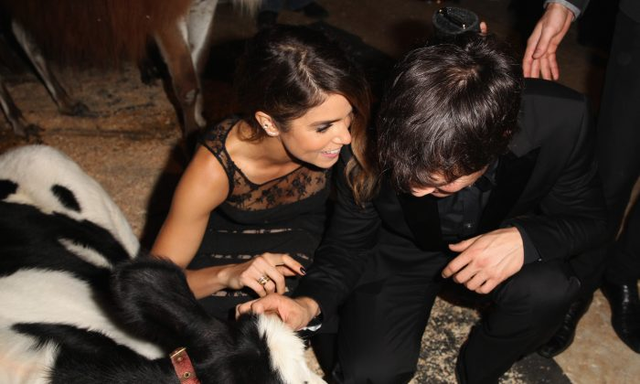 Actress Nikki Reed and actor Ian Somerhalder attend Heifer International's 3rd Annual 'Beyond Hunger: A Place At The Table' Gala at Montage Beverly Hills on August 22, 2014 in Beverly Hills, California. (Jonathan Leibson/Getty Images for Heifer International)