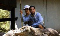 The Strange Lives of Komodo Dragons