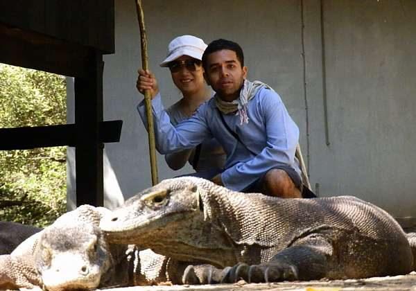 Komodo Dragons (Vagabond Journey Travel)