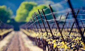 My Top 5 Wineries in Europe