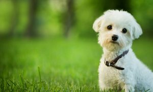 National Dog Day August 2014 Pictures: 10 Quotes and Photos for National Dog Day (Foundation)