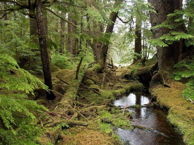 Windy Bay rainforest (Sam Beebe, Ecotrust)