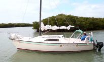 Discovering Caladesi Island in Florida (Video)