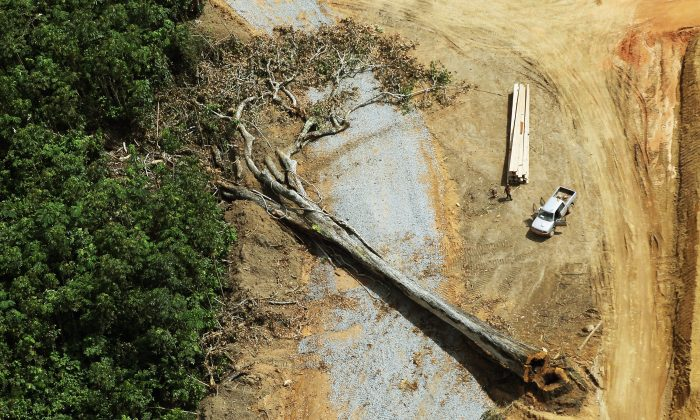 """The """"world's oldest tree"""" was not cut down accidentally by loggers in the Amazon forest. A felled tree lies in the construction site of the Belo Monte dam complex in the Amazon basin on June 15, 2012 near Altamira, Brazil. (Mario Tama/Getty Images)"""