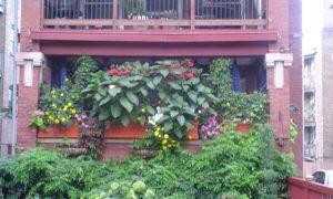 Save Pollinators, Fight City Hall