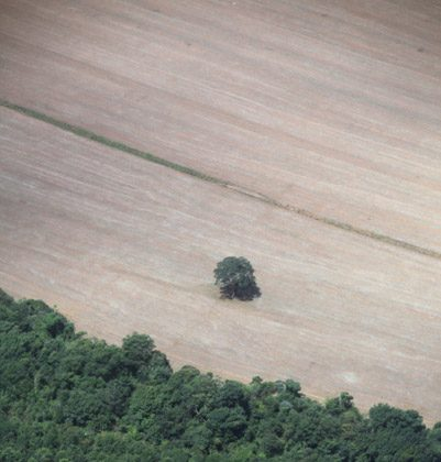 A lone Brazil nut tree sits on the edge of a cleared forest in Mato Grosso, Brazil. Photo by Rhett A. Butler.