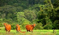 Thai Government Plans Road Through Largest Forest