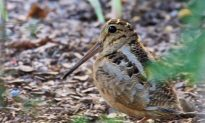 A Wild Time in NYC: Migratory Birds Drawn to City's Green Spots