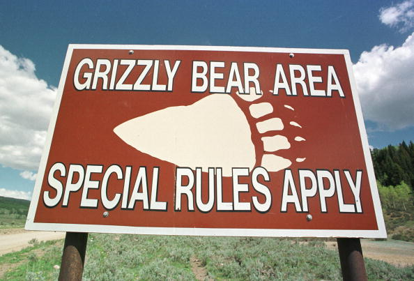 A sign warning vistors of grizzly bears sits at the entrance to Bridger-Teton National Forest May 27, 2001 near Cora, WY. State and federal wildlife officials are urging the public to be cautious this summer about grizzly bears while visiting parks in northern Wyoming. (Photo by Michael Smith/Getty Images)