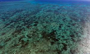 Great Barrier Reef Safe, For Now.